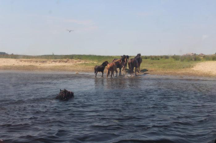 Rybářská dovolená v Deltě Dunaje