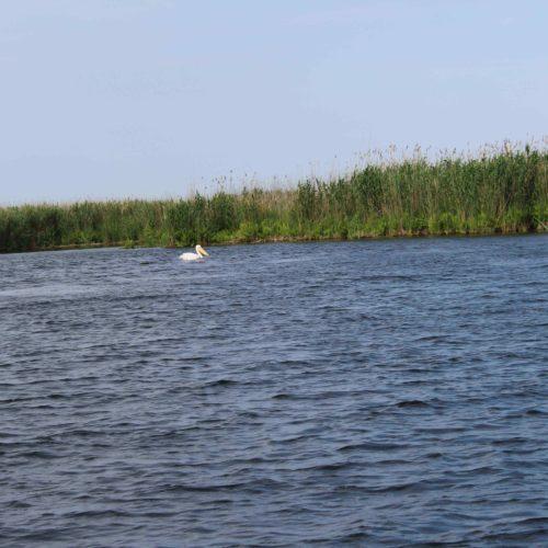 Dunajská delta | Zdroj: CK KM